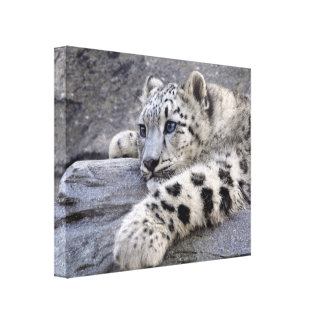 All Played Out Wrapped Canvas Print