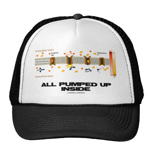 All Pumped Up Inside (Sodium-Potassium Pump) Hat