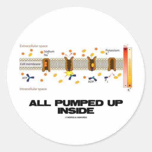 All Pumped Up Inside (Sodium-Potassium Pump) Round Stickers