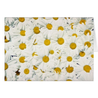 All-purpose daisy flowers greeting card