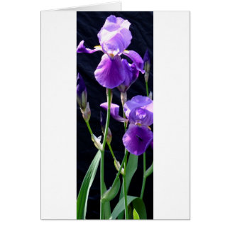 All purpose photo greeting card with Iris Greeting Card