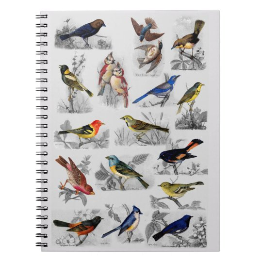 All Sorts of Birds Spiral Notebook