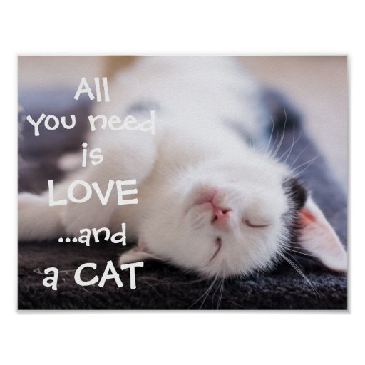 All you need is loveand a cat //