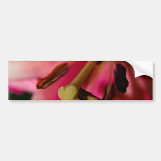 Allamanda Full Bloom Bumper Sticker