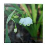 Alleghany Spurge Spring Flower Tile