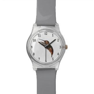 Allen's Hummingbird Watch