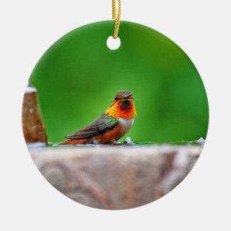 Allen's Hummingbird's Ornament