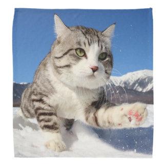 Alley cat niyan good fortune< Meat sphere full Do-rag