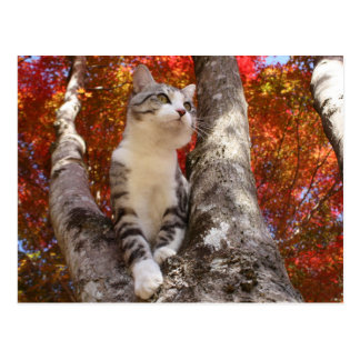Alley cat niyan good fortune< Tinted autumn leaves Postcard