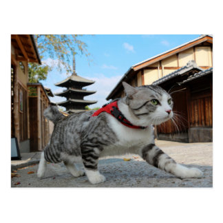 Alley cat niyan good fortune< Yasaka and Yasaka Postcard