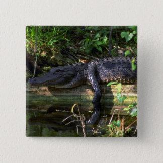 Alligator afternoon, Everglades, Florida 15 Cm Square Badge
