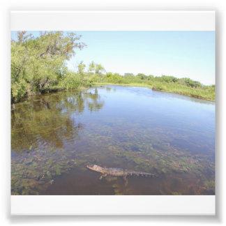 Alligator Alley Photograph