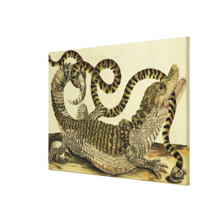 Alligator and Snake, 1730 (coloured engraving) Canvas Print