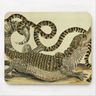 Alligator and Snake, 1730 (coloured engraving) Mouse Pad