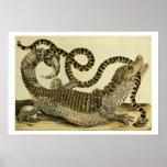 Alligator and Snake, 1730 (coloured engraving) Poster