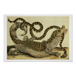 Alligator and Snake, 1730 (coloured engraving) Poster