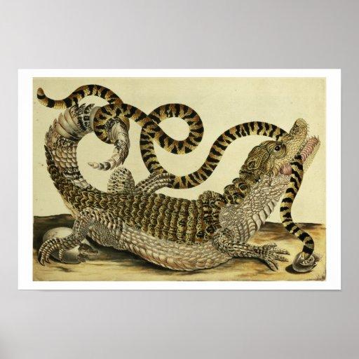 Alligator and Snake, 1730 (coloured engraving) Print