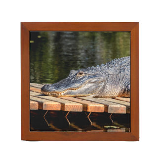 Alligator at Homosassa Springs Wildlife State Park Desk Organiser