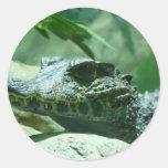 alligator,caiman round sticker