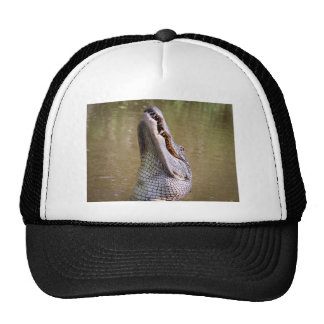 Alligator Cap