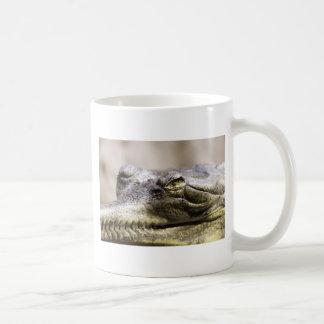 Alligator closeup photo basic white mug