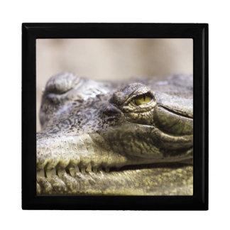 Alligator closeup photo jewelry box