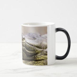 Alligator closeup photo mugs