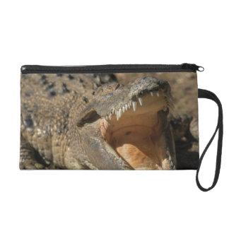 Alligator Farm Wristlet Clutch