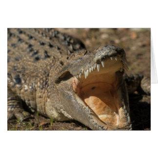 Alligator Farm Card