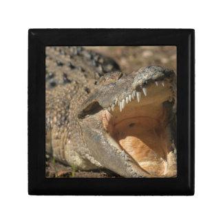 Alligator Farm Gift Box