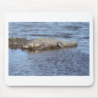 Alligator Gator In Water Mouse Pad