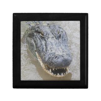 Alligator Gift Box