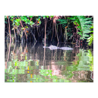 Alligator in the River Photo Art