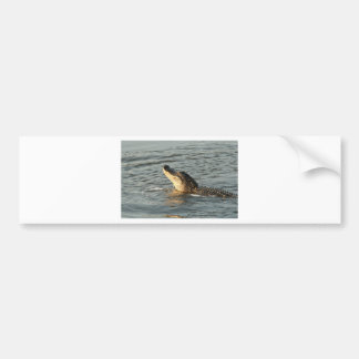Alligator in the water. bumper sticker