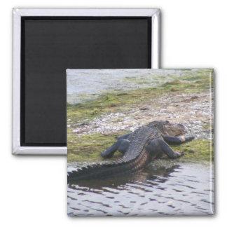 Alligator Magnet