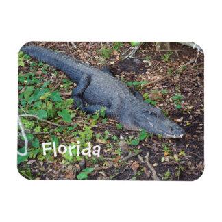 alligator on land magnet