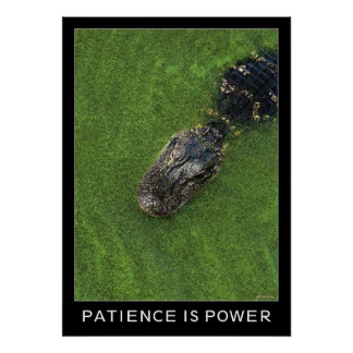 Alligator • Patience is Power • 20x28 Inspiration Poster