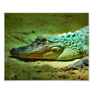 Alligator Photo Print