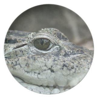 Alligator Photo Plate