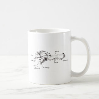 Alligator Skull Diagram Coffee Mug