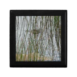Alligator Small Square Gift Box