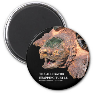 Alligator snapping turtle magnet