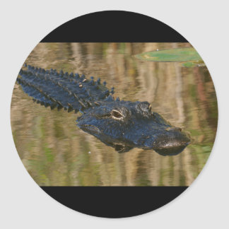 Alligator Swimming Classic Round Sticker