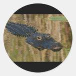 Alligator Swimming Round Sticker