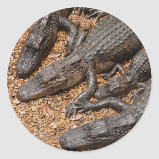 alligators classic round sticker