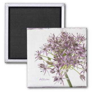 Allium Square Magnet