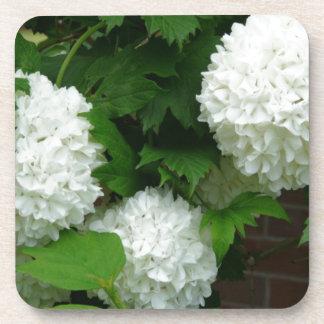 Allium White Round Flowers Drink Coaster