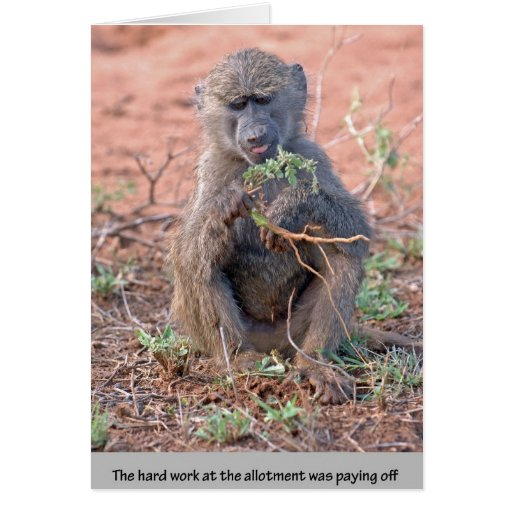Allotment Baboon Card