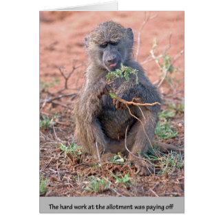Allotment Baboon Greeting Card