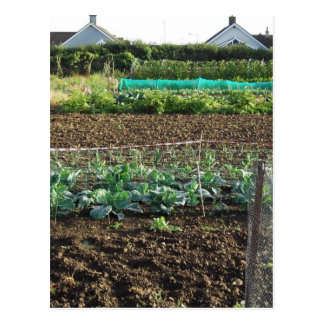 Allotment Postcard